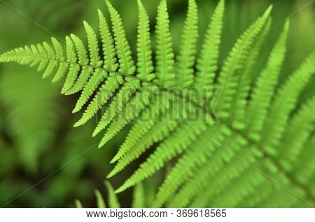 Forest fern natural environtment background. Sharpnes on the top of leaf.