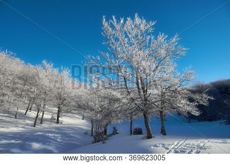 frozen forest in winter mountains of Sicily tourism outdoor activity