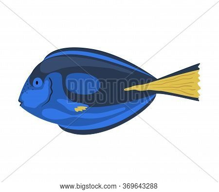 Regal Tang Fish, Marine Life Element, Sea Or Ocean Creature Vector Illustration