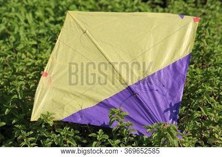 Colorful Landed Kite With Partial View Under Bright Daylight.