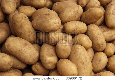 Potato Crop Texture