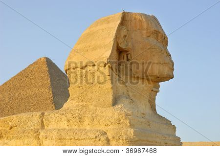 Close-up view of Sphinx