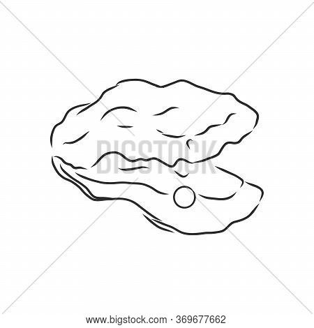 Oysters. Restaurant And Gourmet Seafood In One Collection Of Hand Drawn Graphic Elements. Oyster, Ve