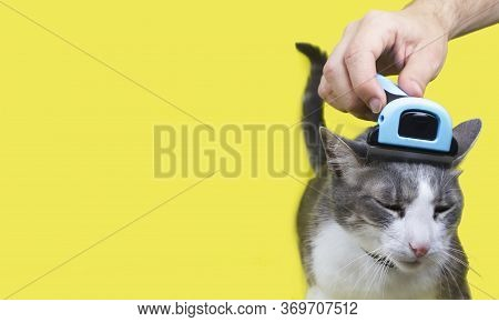 Hand Combing Cat?s Head With Special Deshedding Tool, Pet Care At Moulting Season. Grooming Brush. C