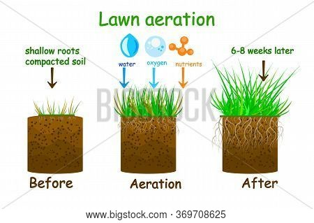 Lawn Aeration Stage Illustration. Before And After Aeration. Gardening Grass Lawn Care, Landscaping,