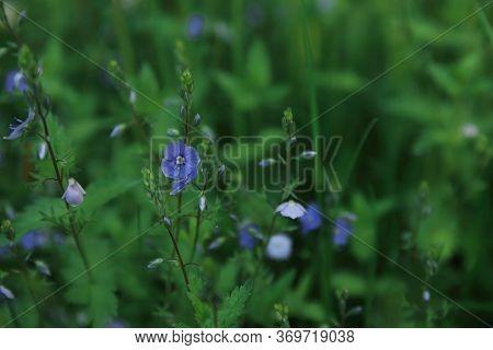 Low Key Lighting On Blue Wild Forest Flower