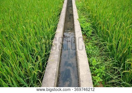 Ditch beside a grassy embankment in Rice field