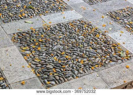 Stones And Petals. Background From Paving Of Small Pebbles And Stones With Fallen Flower Petals. Str