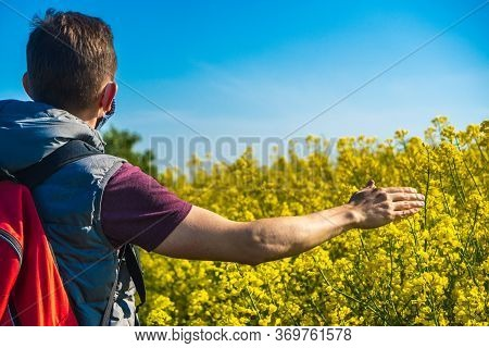 Back Of European Man Traveler Near A Yellow Flowering Rapeseed Field On Sunny Day. Happy Man Outdoor