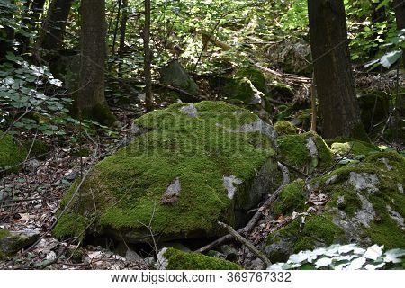 Green Moss On Big Rock In Forest In National Park Djerdap