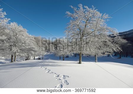 frozen trees and snowshoes tracks on winter landscape of Sicily tourism outdoor activity