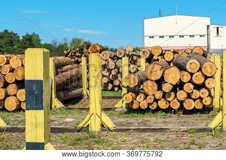 Piles Of Freshly Cut Logs At The Sawmill Factory Prepared For Delivery