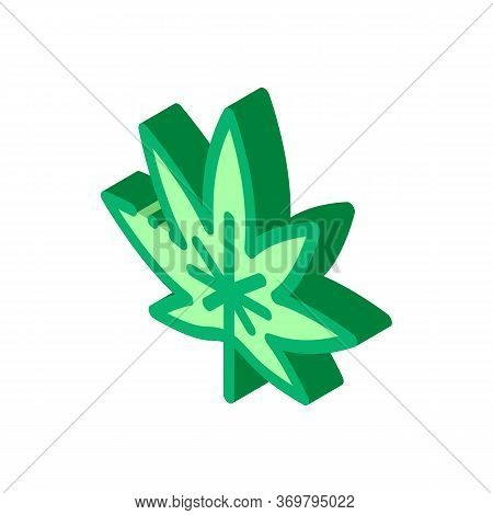 Hemp Plant Leaf Icon Vector. Isometric Hemp Plant Leaf Sign. Color Isolated Symbol Illustration
