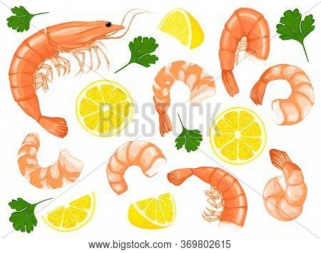 Shrimp, Parsley, Lemon Drawing On A White Background. Shrimp Prawn Icons Set. Collection Shrimp, Shr
