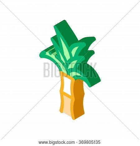 Sugar Cane Plant Icon Vector. Isometric Sugar Cane Plant Sign. Color Isolated Symbol Illustration