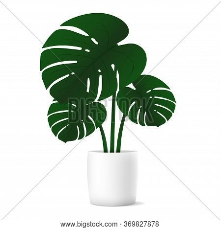 Tropical Plant Monstera For Interior Decor Of Home Or Office On White Background. Vector Illustratio