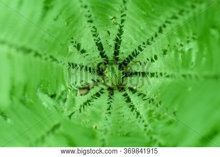 Green Fern In The Forest. Green Leaf Of A Fern On A Green Background. Young Fern In The Spring Summe
