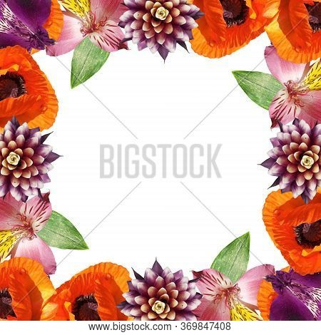 Beautiful Floral Pattern Of Guzmania, Alstroemeria And Poppy. Isolated
