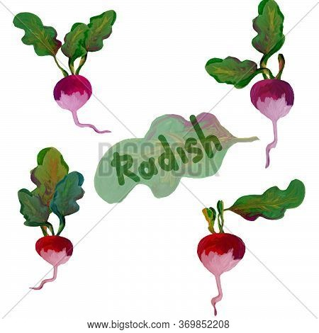Set Of 4 Gouache Painted Radishes, Red Vegetables With Leaves, For Creativity And Design Radish Insc