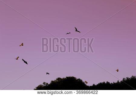 Eagles Flying In Light Pink Morning Sky. Abstarct Background. Desktop Screensaver