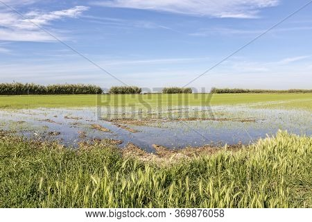 Rice Farming In In The Southern Camargue District, South France