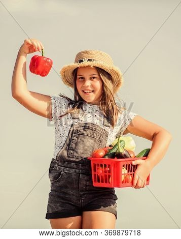 Harvest Season. Girl Adorable Child Farming. Kid Work At Farm. Child Carry Harvest. Buy Organic Food