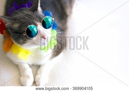 Portrait Of A Funny Cat Wearing Sunglasses Lying In A White Sofa In Summer. Cat Enjoying Holidays An