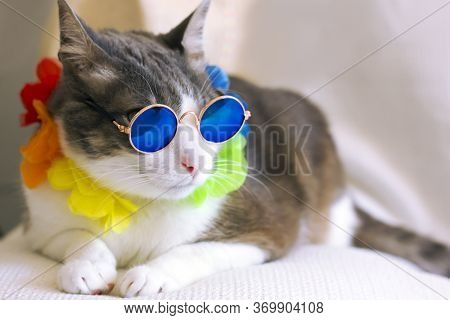 Cat Wearing Rounded Retro Sunglasses Relaxing Sitting On Cauch On Light Background. Holiday Summer C