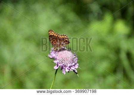Butterfly On A Flower In A Meadow