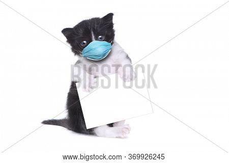 Adorable Baby Tuxedo Style Kitten Wearing PPE Mask