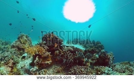 Coral Reef And Tropical Fishes. The Underwater World Of The Philippines. Panglao, Bohol, Philippines