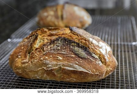 Close Up Of A Freshly Baked Loaf Of Artisanal Whole Wheat And Dark Rye Rustic Sourdough Bread On A C