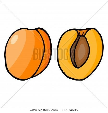 Apricot With Kernel. Hand Drawn Outline Doodle Icon. Colorful Isolated On White Background. Vector I