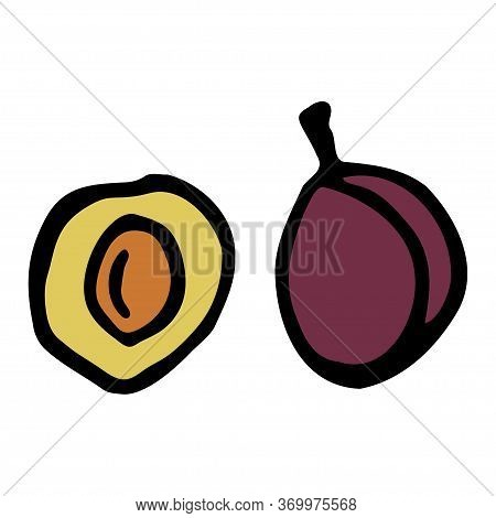 Plum With Kernel. Hand Drawn Outline Doodle Icon. Colorful Isolated On White Background. Vector Illu