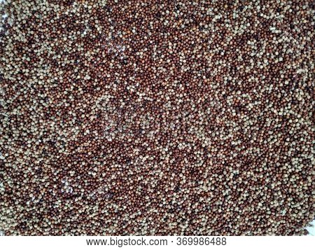Raw Ragi/finger Millet Is A Rich In Protein, Fiber, Calcium, Iron, Prevents From Osteoporosis And Ch