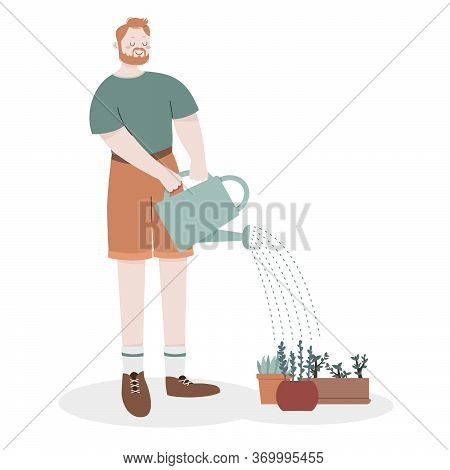 Red-haired Bearded Man In Khaki Shorts Watering Potted Plants From A Watering Can. Gardening, Green