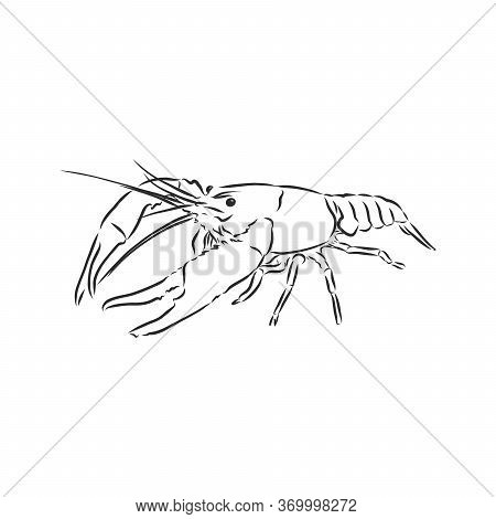 Hand Drawn Crayfish Cancer With Simple Decor On White Isolated Background. River Animal. Cancer Anim
