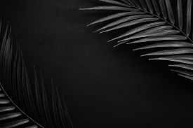 Black Palm Leaves On A Black Matte Slate.
