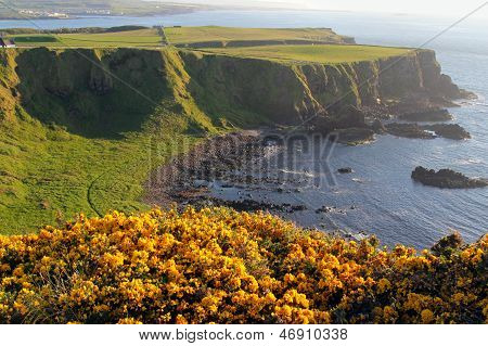 Irish Coast And Yellow Flowered Cliffs