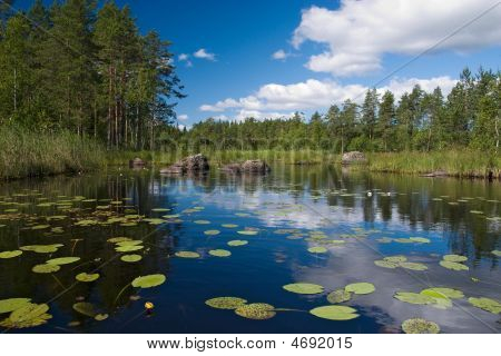 Forest Lake With Flowers