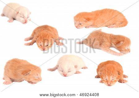 Newborn Kittens On White