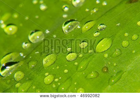 Macro Drops Of Water On The Leaves