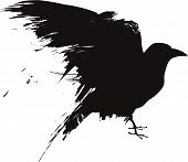 A vector illustration of a raven or crow in a grunge style poster