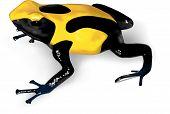 A vector illustration of Dyeing Poison-Dart Frog (Dendrobates tinctorius) - AI 8 EPS. poster