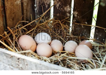 Freshly Laid Eggs In A Box With Hay