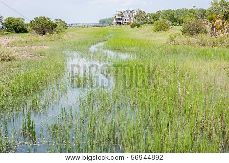 Wetlands Of South Carolina