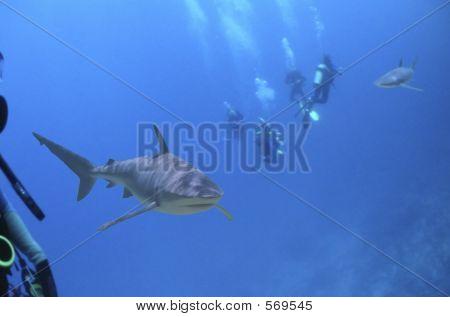 Diversharks