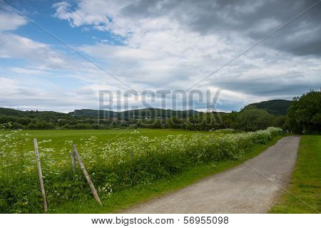 Grassland And Road Near Bodo, Norway
