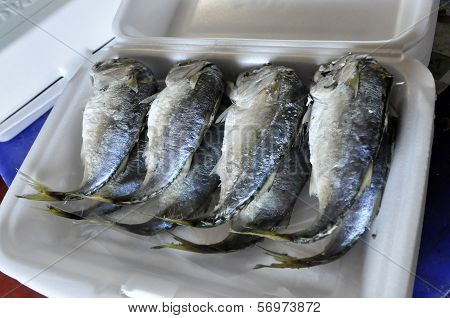 Mackerel Fish Box Set Thailand