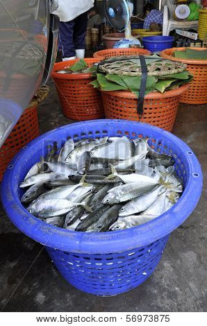 Mackerel Fish Fresh Basket Thailand